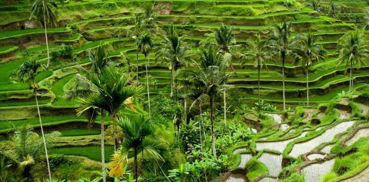 Chedi-Club-Ubud-Bali-DES-BaliRiceTerrace.jpg